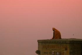 印度 |  Sam Hawley
