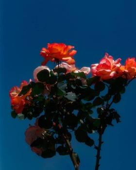 花儿 | Monty Kaplan 