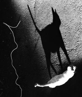 街头的猫 | 摄影师Evgeniya Gor