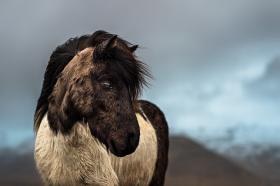 冰岛的动物们 | Samy Berkani