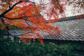 静静等候的京都美色