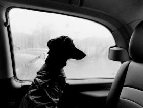 黑白街头 | Lucian Zamfir