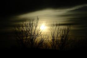 落日老树枝
