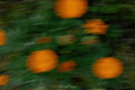 """""""橙黄橘绿"""""""