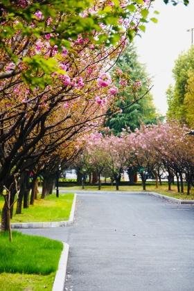 校园的春色