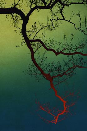 诗意之境 | 摄影师Albarran Cabrera浮世绘般的影像 