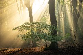 同一片森林的四季