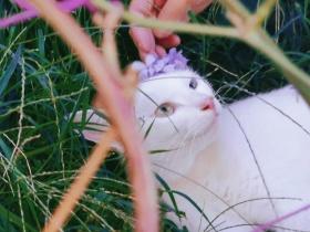 猫的惬意时光