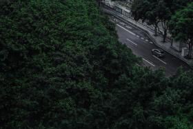 重庆没有森林