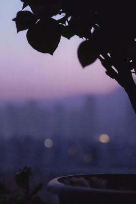 紫色备忘录