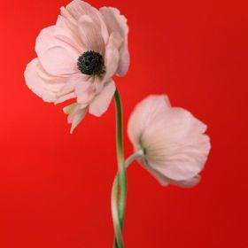 花儿 | Paula Codoner 