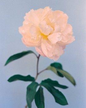 花儿   Paula Codoner 