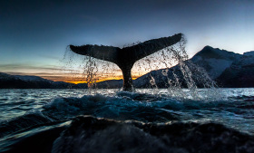 鲸 | AUDUN RIKARDSEN