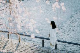 走吧,收起忧愁,我们去春天里!|京都