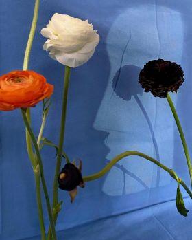花儿   Sarah van Rij 