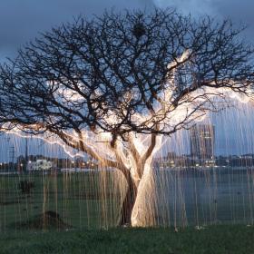 發光的樹 | Vitor Schietti光繪作品