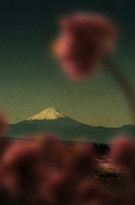 花兒 | Albarrán Cabrera