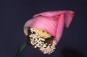 花兒 | 荒木經惟