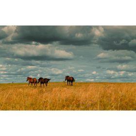 电影般质感的影像 | Viktor Balaguer 镜头里美丽的俄罗斯村庄 