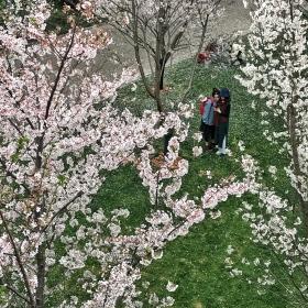 春天的故事